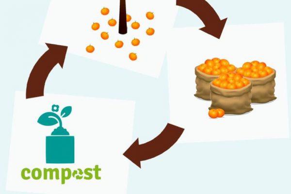 Campaña de Recogida de naranjas
