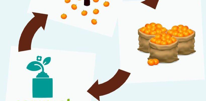 Recogida Naranjas